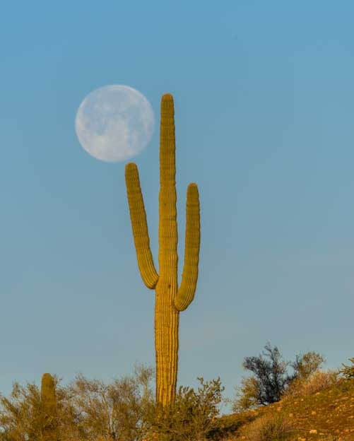 Full moon and saguaro cactus-min
