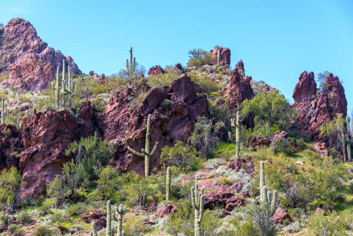 Sonoran-Desert-cliffs-with-saguaro-cactus-min