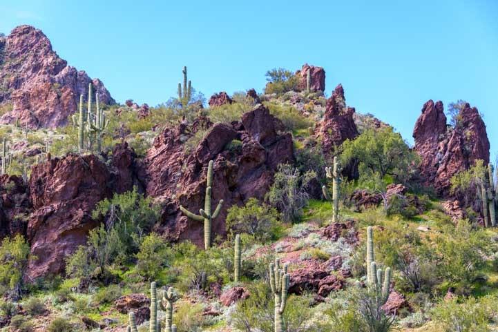 Sonoran-Desert-cliffs-with-saguaro-cactus-min