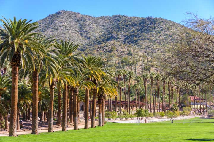 Palm trees Castle Hot Springs Resort Arizona-min