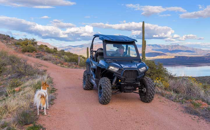 Dog and Polaris RZR 900 XC EPS Edition-min