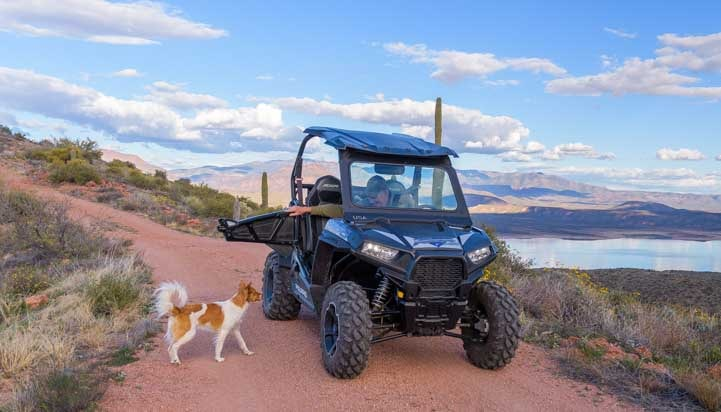 Dog approaches Polaris RZR 900 XC EPS Edition-min