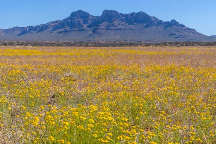 Mountains with wildflowers as far as the eye can see in Arizona-min