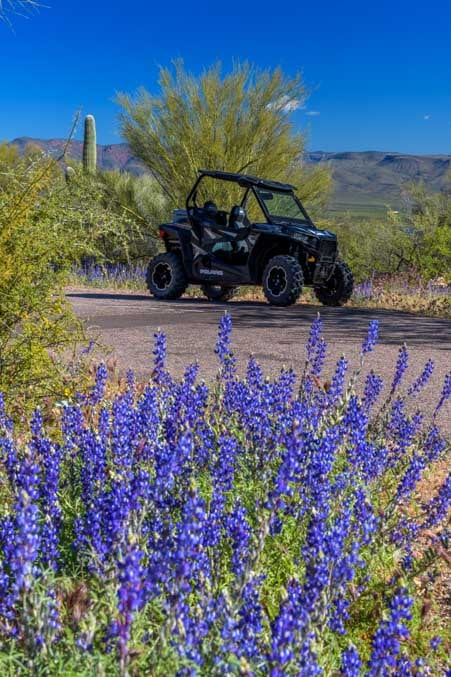 Polaris RZR with lupine wildflowers in Arizona-min
