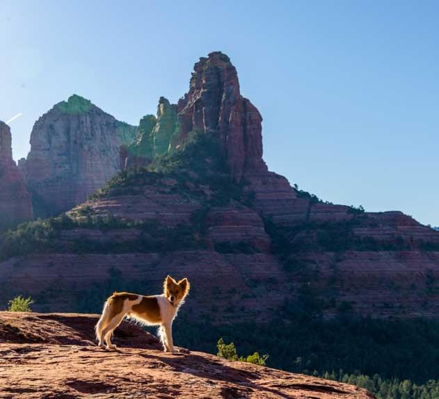 Brins Mesa Trail Sedona Arizona with puppy-min