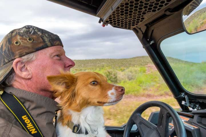 Puppy sniffs the breeze in Polaris RZR-min