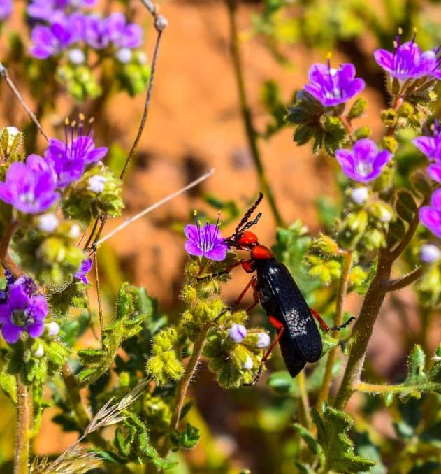 Bug in the wildflowers in Arizona-min