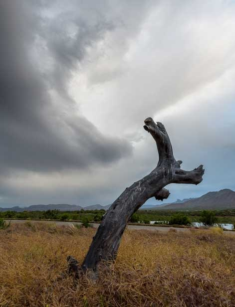 Curvy tree trunk and swirling cloud-min