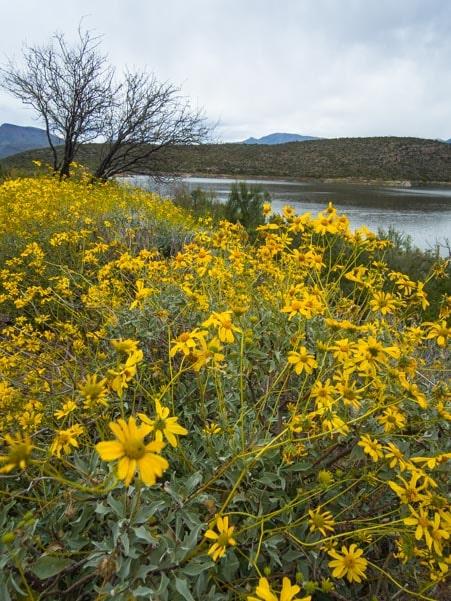 Flower Power in Arizona-min