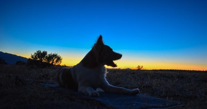 Puppy silhouette at sunset-min