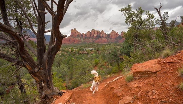 Puppy runs on hiking trail-min