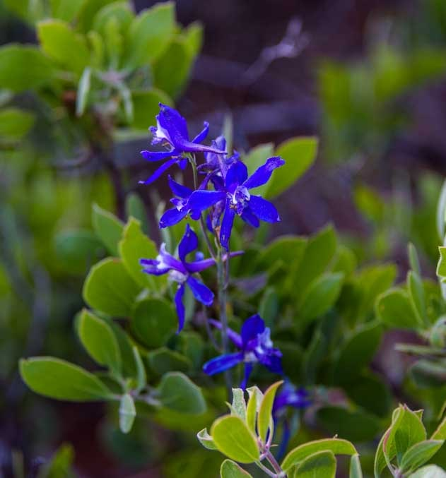 Wildflower in Sedona Arizona-min