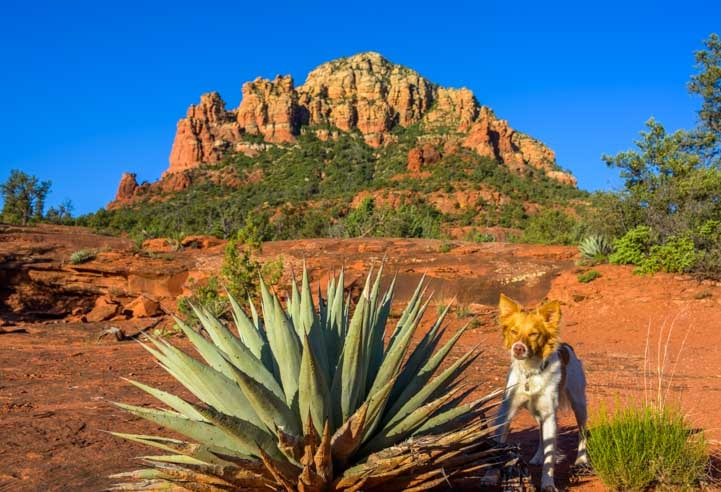 Puppy hiking Broken Arrow Trail Sedona Arizona-min