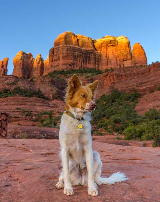 Puppy in front of Cathedral Rock Sedona Arizona Templeton Hike
