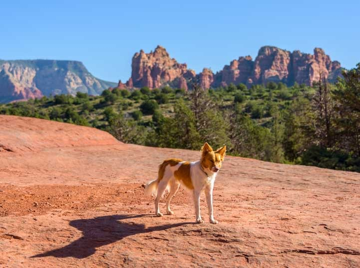 Posing puppy Broken Arrow Trail Sedona Arizona_-min