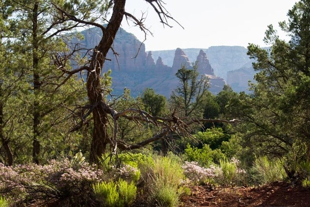 Dawn on Templeton Trail hiking in Sedona Arizona-min