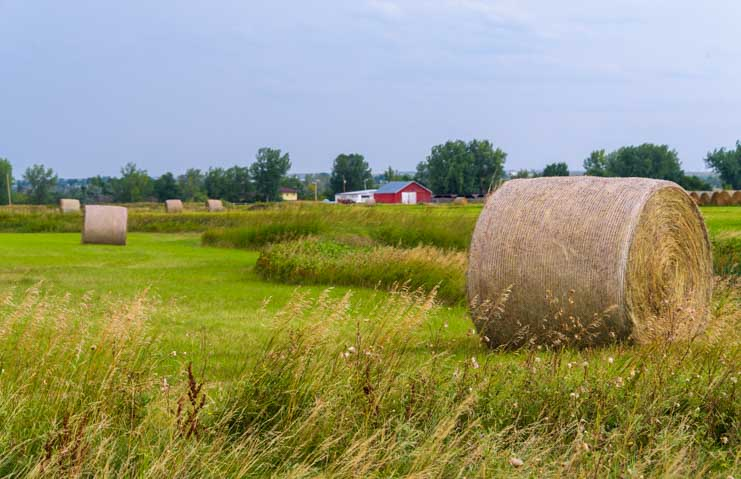 Hay bales in South Dakota-min (1)