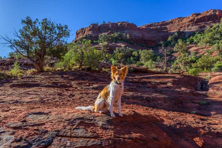 Puppy in the red rocks of Sedona Arizona-min