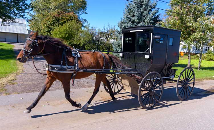 Amish buggy in Shipshewana Indiana-min