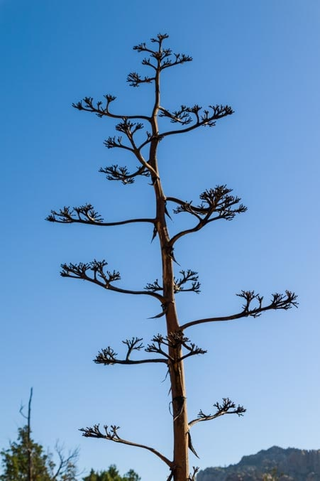 Unusual plant Sedona Arizona-min