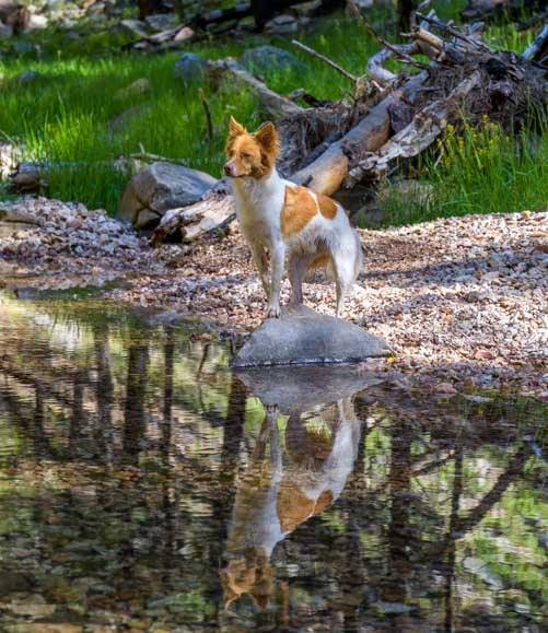 A puppy poses on a rock in a stream-min