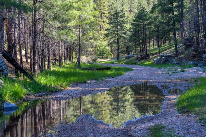 Forest reflections in the early morning-min