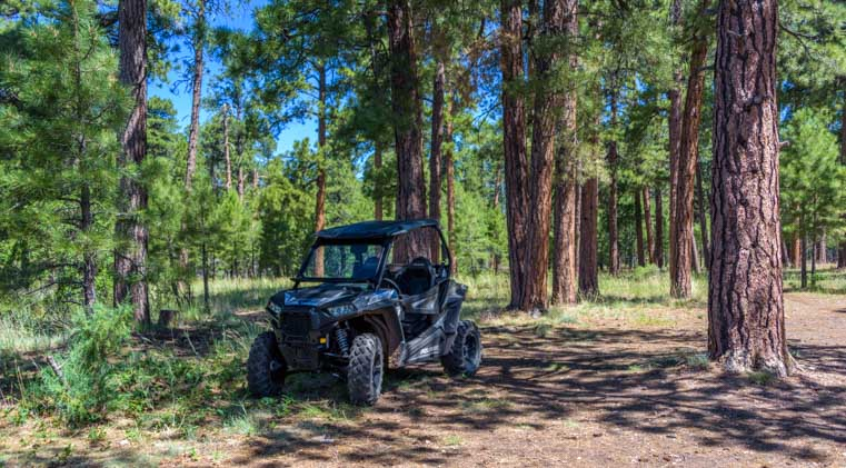 Polaris RZR ride through ponderosa pine forest in Arizona-min