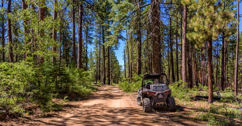 Polaris RZR ride in the ponderosa pine forest-min