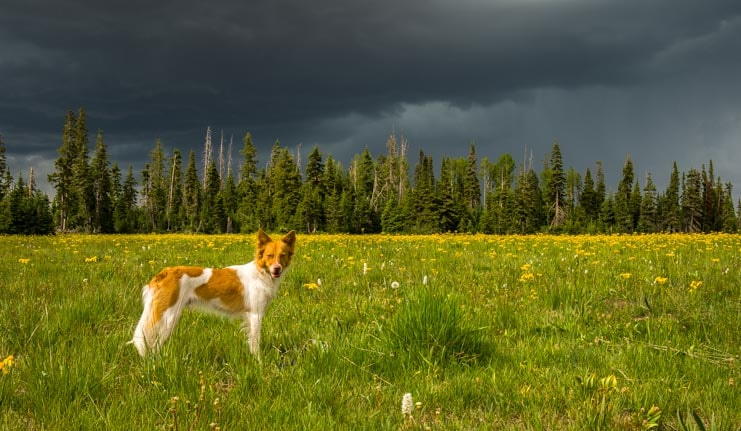 Puppy in a field under storm clouds-min