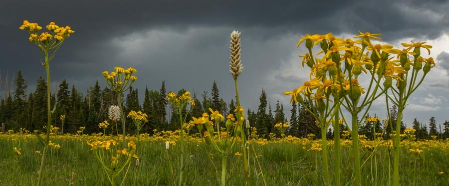 Wildflowers and storm clouds-min
