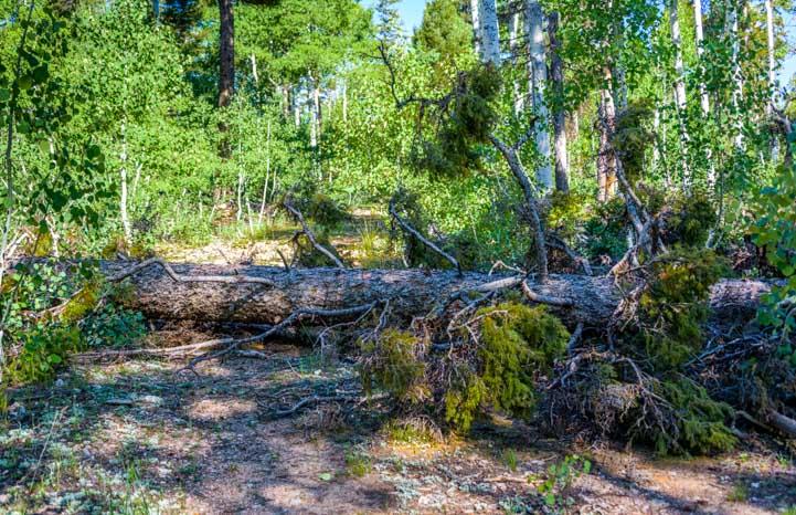 Tree trunk across trail in the woods-min