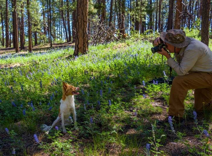 Photographing model puppy in lupine wildflowers in ponderosa pine forest-min