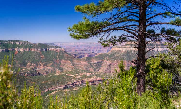 Timp Point Overlook at Grand Canyon-min