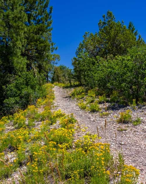 Wildflowers on trail at Timp Point Grand Canyon-min