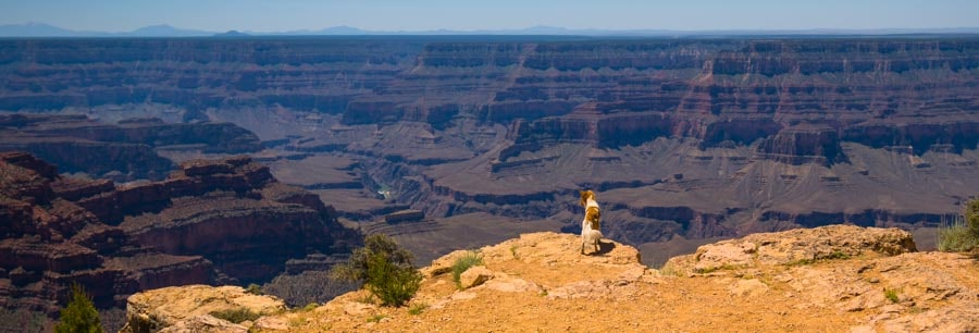 Puppy checks out Point Sublime Overlook at Grand Canyon-min