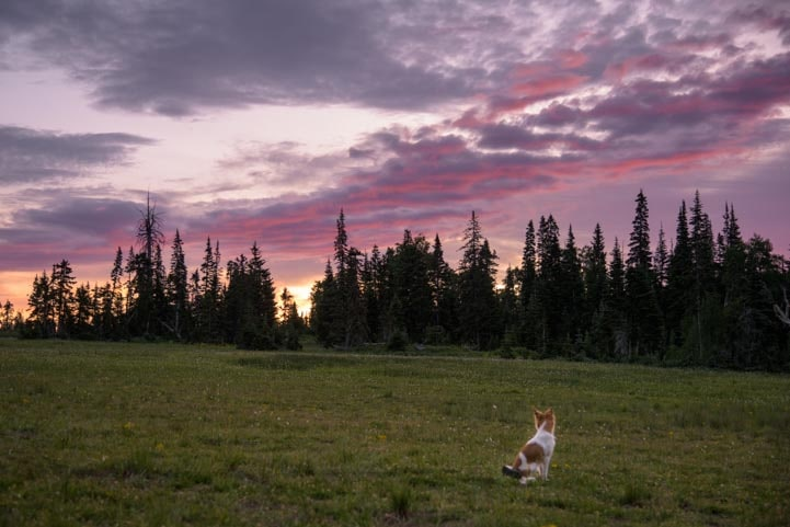 Puppy watches the sunset-min