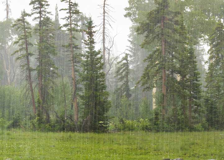 Pouring rain in the woods in Utah-min