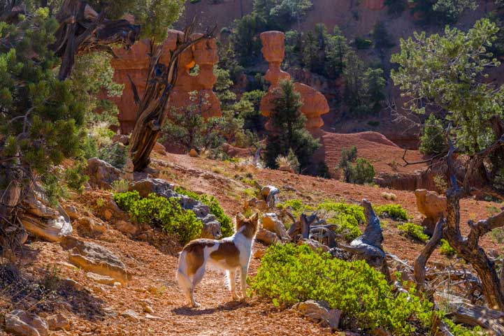 Puppy on Arches Trail Red Canyon Utah-min