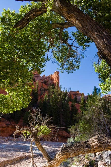 Red rocks through the trees in Casto Canyon Utah-min
