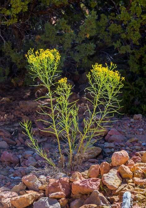 Flowers in Utah-min
