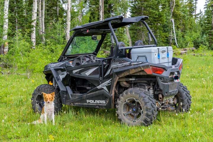 Puppy wants a Polaris RZR ride-min