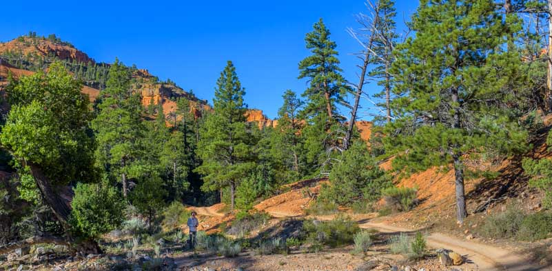 Woods and red rocks in Casto Canyon Utah-min