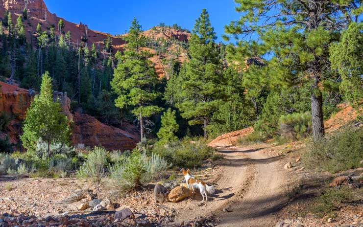 Two track trail in Casto Canyon for ATV UTV Horses and hiking-min