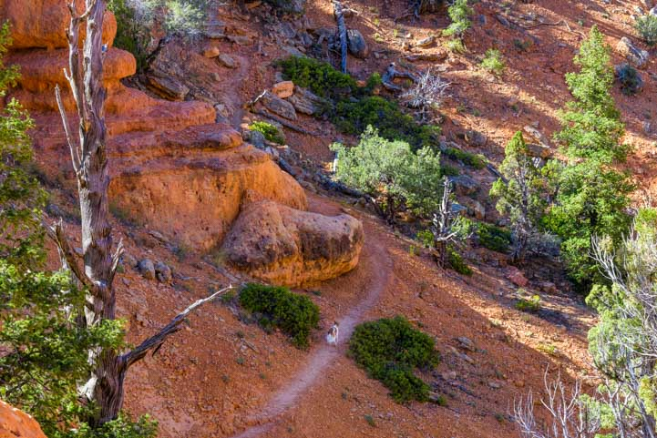 Running puppy on Arches Trail Red Canyon Utah-min