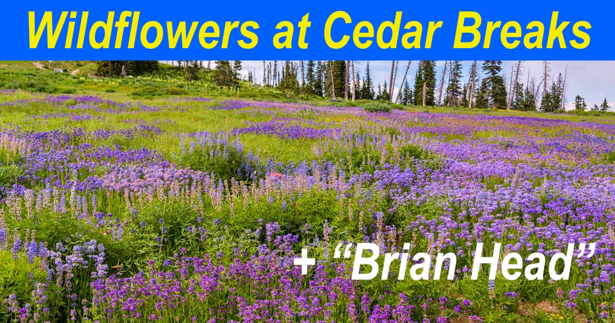Wildflowers at Cedar Breaks plus Brian Head Utah-min