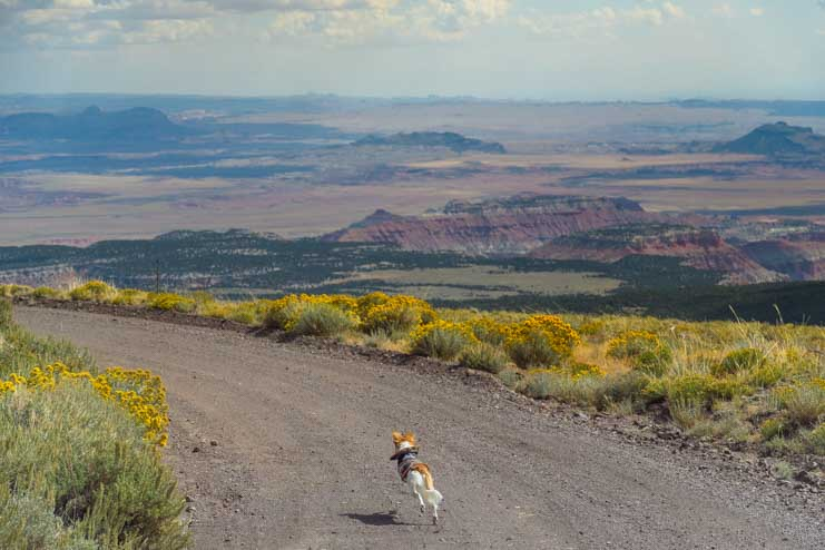 Running free near Capitol Reef National Park Utah-min