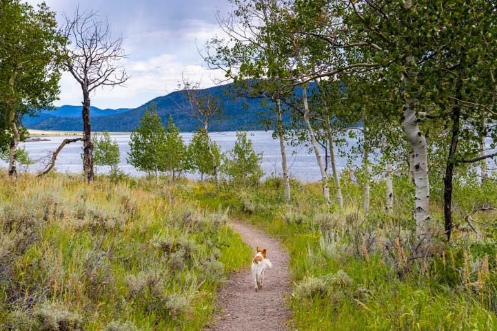 Puppy leads the way on Lakeshore Trail at Fish Lake Utah-min