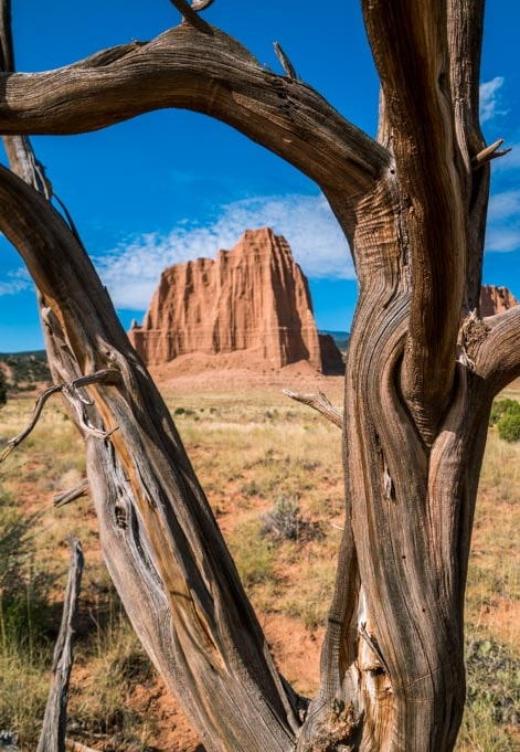 Cathedral Valley Capitol Reef National Park Utah pinnacle framed by tree-min