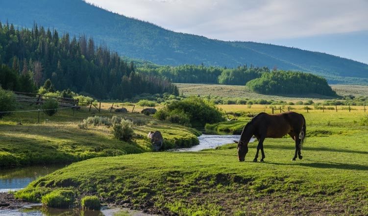 Horse grazing in Utah-min