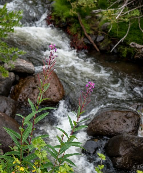 Stream with flowers in Utah-min